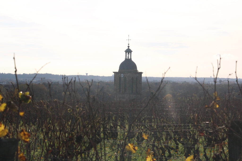 Vouvray Vineyards - @Neigara W.